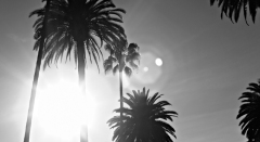 palmier