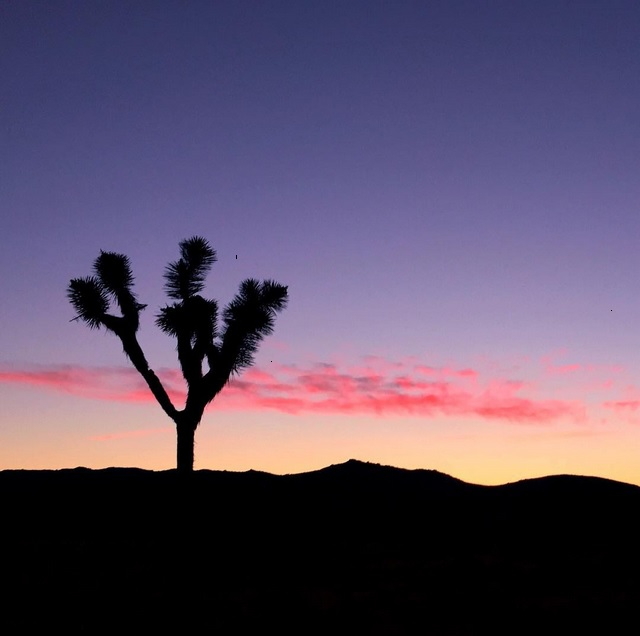 desert 49